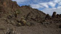 Walking Through Organ Pipe Cactus National Monument, Teddy-Bear Cholla