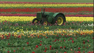 Tractor In Field At Tulip Farm