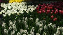 Field Of Flowers At Tulip Farm