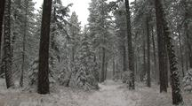 Steadicam Walk Through Forest During Snowfall