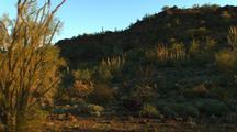 Travel Through Organ Pipe Cactus National Monument