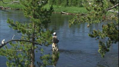 Man Fly Fishing In Yellowstone