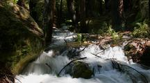 Time Lapse Creek Rapids Through Bg Sur Forest
