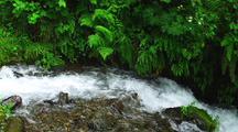 Fast Moving Creek Below Lush Vegetation
