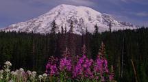 Wildflowers In Front Of Mt, Rainier