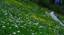 Field Of Yellow And White Wildflowers