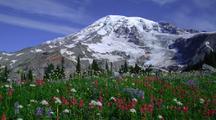 Mt Rainier Behind Field Of Wildflowers