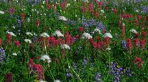 Field Of Colorful Wildflowers