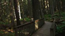 Walking On Boardwalk Trail Through Forest
