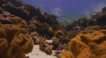 Close Up Of Tropical Colorful Fish And Coral To Zoom Out Of Coral Reef Showing Corals, Sponges, Sandy Bottom, Clear Water And Ripples On Surface With A View Of A Blue Sky And White Clouds.