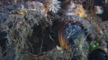 Scaled Worm Walks Across The Reef