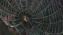 Spider Web Covered In Early Morning Dew