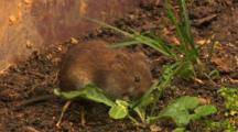 Vole, Have A Wash, Running Out,