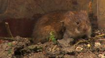 Vole, Motionless, Smell, Have A Wash,
