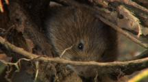 Vole, Smell, Motionless,