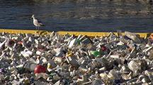 Sea Gull Walks On Boom Used To Contain River Trash