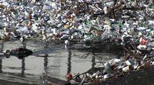 Birds Among Trash Collected In Los Angeles River System