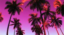 Palm Trees Against A Purple Toned Sky, On The Big Island Of Hawaii, Tilt