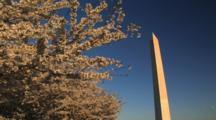 Washington Monument Through The Cherry Trees, Washington, D.C.