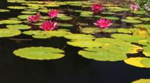 Tranquil Pond With Koi Inside San Juan Capistrano
