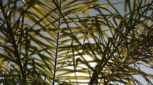 Sunlight Filtering Through A Tropical Plant