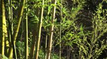 Bamboo Leaves Swaying In The Breeze