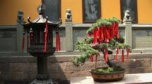 Chinese Lantern And Bonsai Tree Holding Prayer Ribbons, Jade Buddha Temple, Shanghai, China