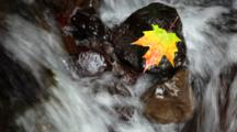 Maple Leaf Resting On A Rock In The Middle Of A Flowing Stream