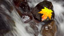 Maple Leaf Resting On A Rock In The Middle Of A Flowing Stream, Time Lapse And Zoom In