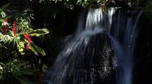 Waterfall With Red Ginger