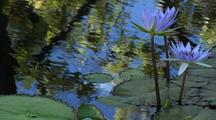 Water Lily With Sky And Plant Reflections