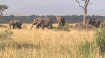 Small Herd Of Elephants