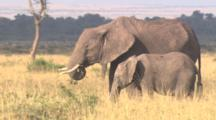 Small Herd Of Elephants, Focus On Mother And Calf