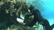 Diver Looks At Identification Chart
