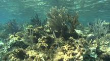Shallow Coral Reef, Sea Fans, Soft Corals