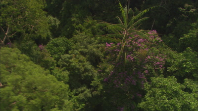 Aerial Stock Footage of Forests