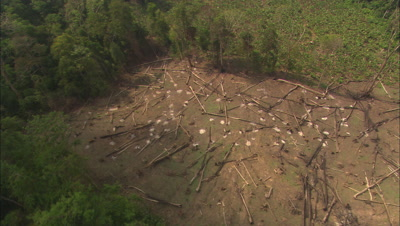 Aerial View Of Malaysia, Dense Forest, Fresh Logging