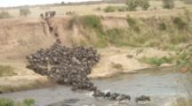 Wildebeest Going Into Water At The Mara River
