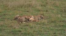 Cheetah Eating A Grant's Gazelle
