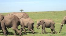 Elephant Herd With Baby