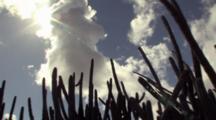 Pan Around Tall Cactus