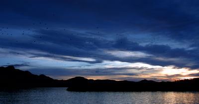 WS Pan of Sunset at Kalong Island,Komodo, Indonesia with fruit bats,Sunda Flying Foxes, flying from the island