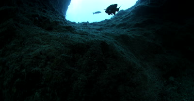 Exiting Blue Holes Cave , Palau the silhouette of a Harlequin Sweetlips, Plectorhinchus chaetodonoides shows the way out
