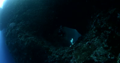 A diver Exiting Blue Holes Cave , Palau while a Harlequin Sweetlips, Plectorhinchus chaetodonoides enters the cave