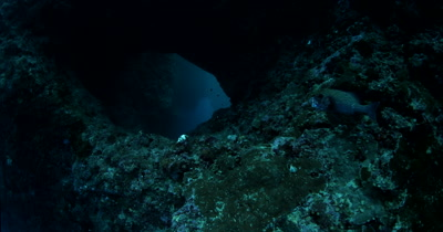 Passing a Harlequin Sweetlips, Plectorhinchus chaetodonoides and entering  the Blue Holes Cave , Palau with the light beams,God Rays shining through