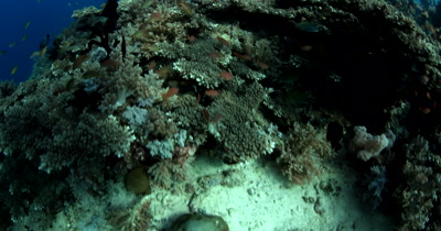 Reveal over the coral reef of a Barrel Sponge, Xestospongia testudinaria