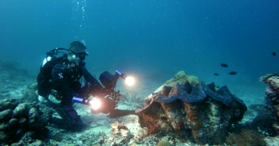 A diver filming s of a huge Giant clam,Tridacna gigas