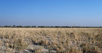 Meerkat or suricate, Suricata suricatta keeping watch