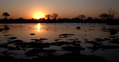 Sunset across the Ngxhaishini fossils pan museum with reflections across the water and silhouettes of trees and a Baobab,Adansonia sp
