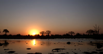 Sunset across the Ngxhaishini fossils pan museum with reflections across the water and silhouettes of trees,birds flying by and a Baobab,Adansonia sp
